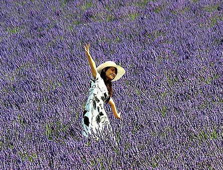 woman-in-purple-fields